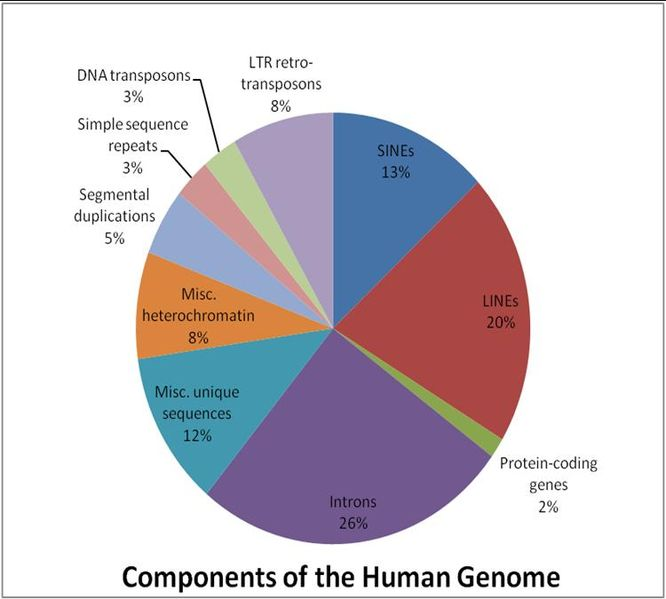components of the human genome